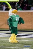 Denton, TX - November 18: North Texas mascot Scrappy the Eagle during the game between the North Texas Mean Green and Army West Point Black Knights (Photo by Mark Woods/DFWsportsonline)
